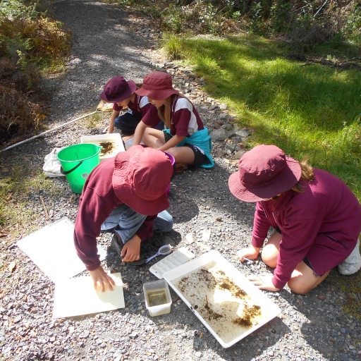 Analysing - Waterbug Survey