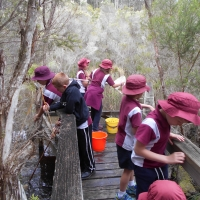 Tathra PS Waterbug Survey 2016
