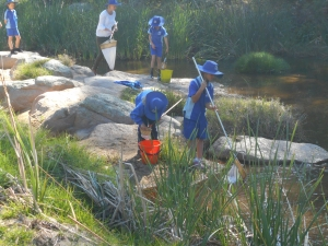 Waterbug Survey Bemboka 2016