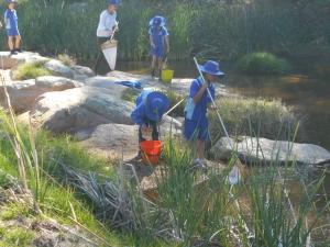Waterbug Survey Bemboka 2016