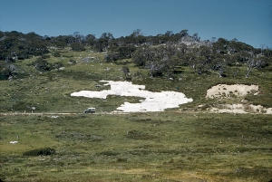CSIRO research into alpine areas
