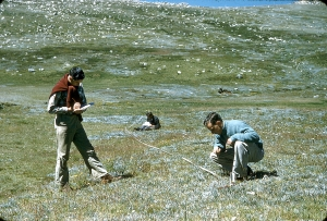 Scientists carrying out vegetation studies in alpine vegetation