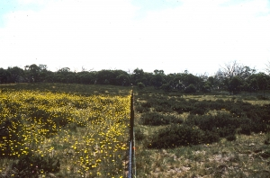 Fenceline shows how grazing impacts on vegetation