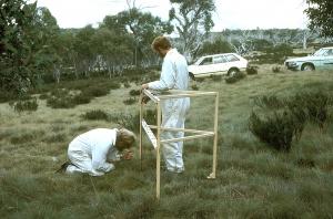 Scientists doing vegetation survey in alpine area