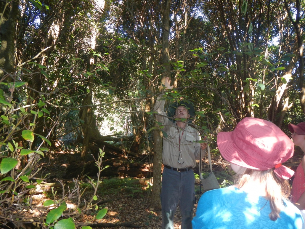 Discussing the Rainforest with students