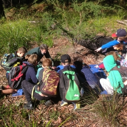 Looking at the insects after a 'shake down' C&T Biodiversity For Kids