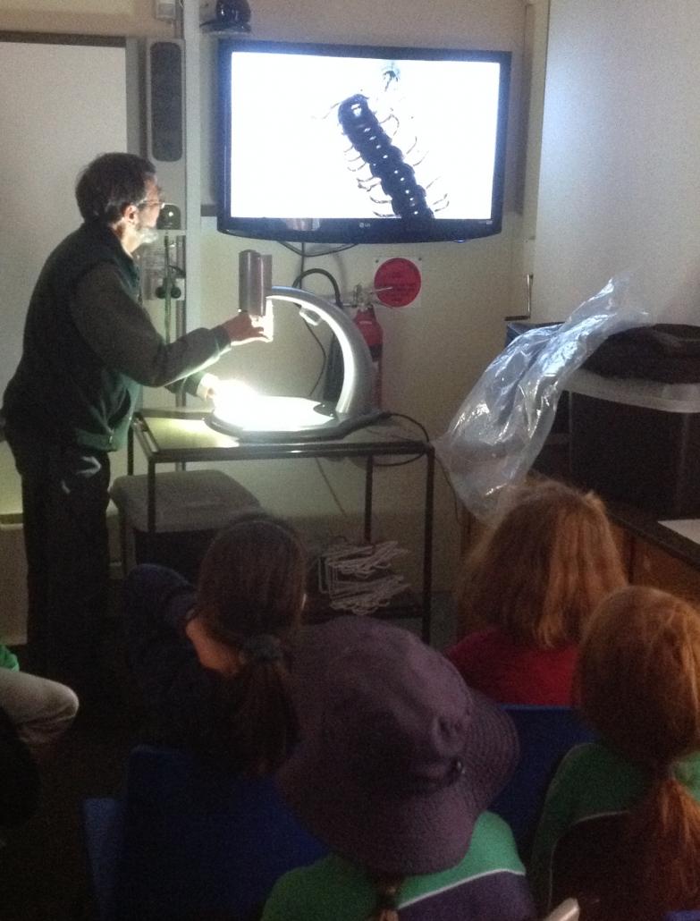 Using the microscope - millipede C&T Biodiversity For Kids