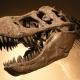 palais_de_la_decouverte_tyrannosaurus_rex_p1050042
