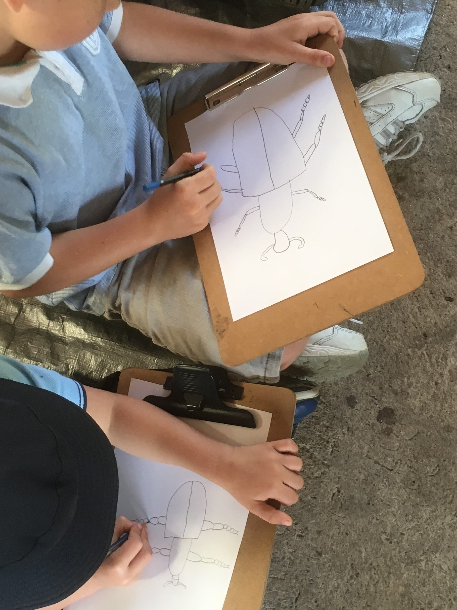 student drawing an insect