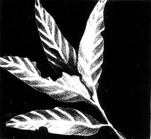 artwork of leaves