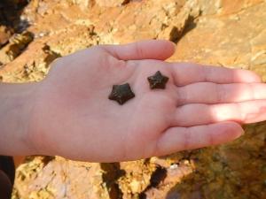 starfish on students hand