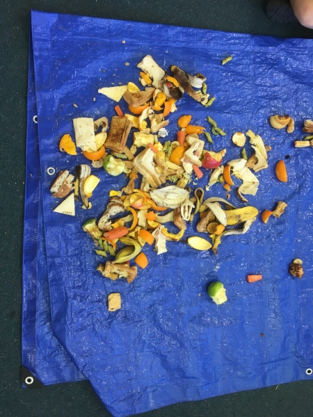 food scraps from waste audit