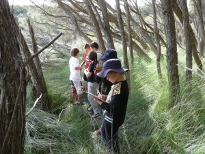 Students in tea tree forest recording data